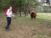 maaike-met-briesende-koe