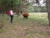maaike-met-briesende-stier